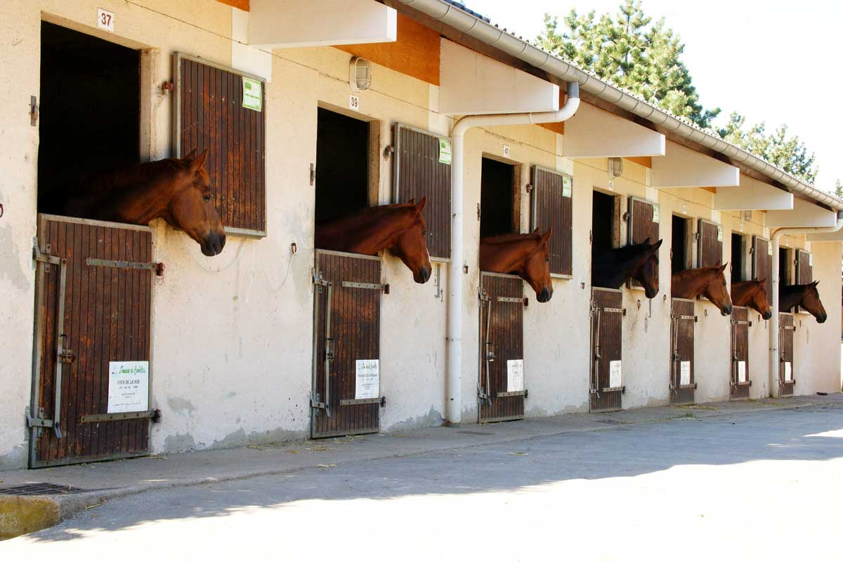 chevaux sortant la tete des boxes des ecuries